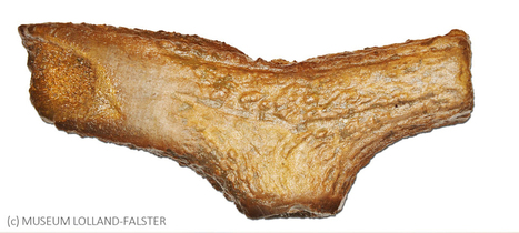 DANEMARK : Danish antler axe find reveals Neolithic German trade | World Neolithic | Scoop.it