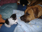 Bunny's Blog: More about Cat People and Dog People | Pet News | Scoop.it