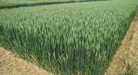 L'Aube agricole prépare l'avenir | Terres & Vignes de l'Aube | Scoop.it