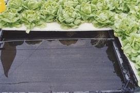 Sistemas de Riego y Cultivos de Hidroponía | Cultivos Hidropónicos | Scoop.it