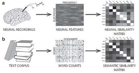 'Neural fingerprints' of memory associations allow 'mind reading' | Biatec | Scoop.it