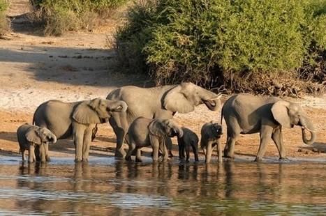 Le Botswana, star du tourisme durable en 2016 | Ecotourisme - Voyager autrement | Scoop.it