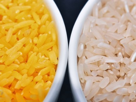 "Global Biotechnology's ""Golden Rice"": GMO ""Super Gruel"" for the Masses 