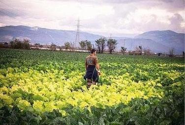 La Campania: terra del sole o terra dei rifiuti?   Ambiente - Environmental   Scoop.it