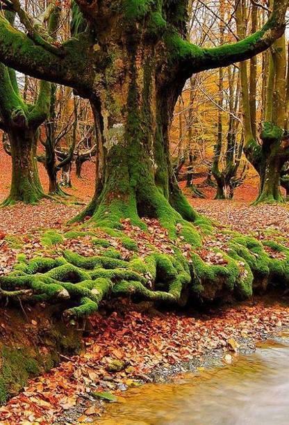 Arbres / Trees | Dusky's Wonders | Les colocs du jardin | Scoop.it