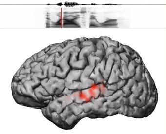 Hoe ons brein taal ontcijfert - Eos Wetenschap   Hersenwerk   Scoop.it