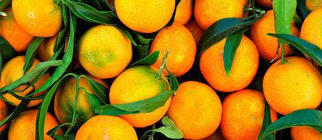 Les mensonges de l'industrie agroalimentaire   Le cri de la courgette... Cuisine biologique   Scoop.it