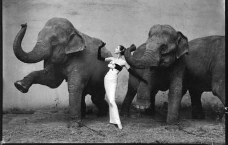 This Week in Photography History: The Birth of Richard Avedon - The Phoblographer | Film, Art, Design, Transmedia, Culture and Education | Scoop.it