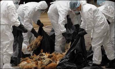 La guía para hipocondriacos sobre los nuevos virus nCoV y H7N9 ... | industria   aplicada a la biologiaII | Scoop.it