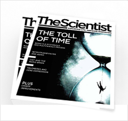 Breathing in Bacteria | The Scientist Magazine® | Microbiology | Scoop.it