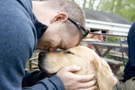 Man's Best Friend Helps Traumatized Veterans Heal | Veterans | Scoop.it