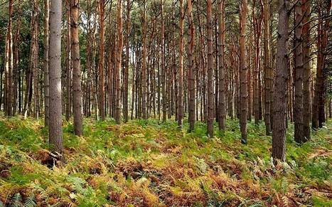 Britain's woodland 'set to shrink' | Envimageine | Scoop.it