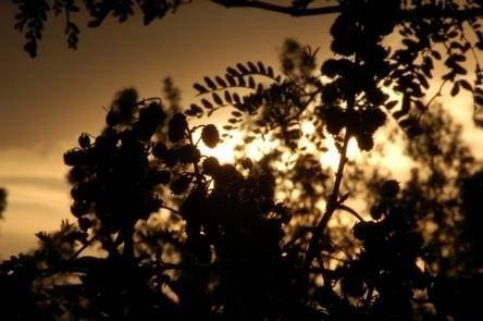 Bajan las emisiones de CO2 por deforestación amazónica   Agua   Scoop.it
