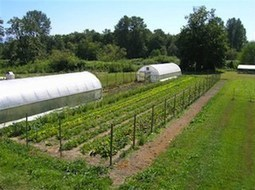 Couple Establishes Farm to Feed Friends, Family and Neighborhood Naturally Grown Food | Farming, Forests, Water, Fishing and Environment | Scoop.it