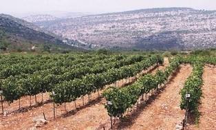 Wine Talk: Look around us | Wine Cyprus | Scoop.it