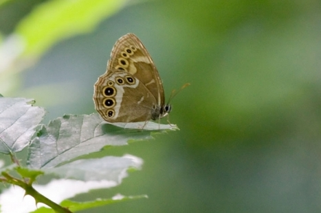 Cher : 1000 espèces d'insectes sur les Chaumes de la Périsse | EntomoNews | Scoop.it