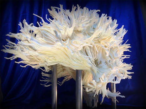 Brain white matter modelled with 3D printing - CNET | Neuroscience | Scoop.it
