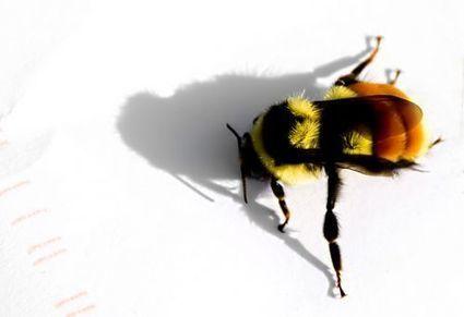 En bref : les abeilles aiment le goût des piscines d'eau salée | Actus Eau | Scoop.it
