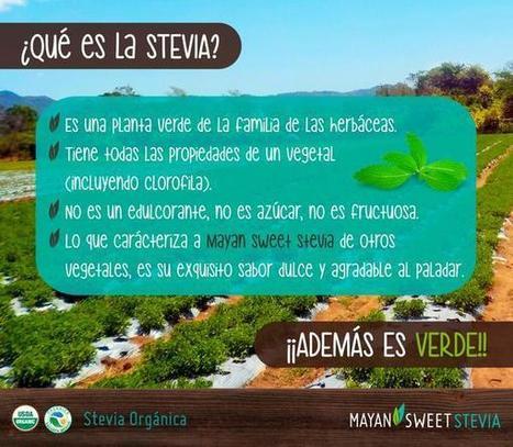 Mayan Sweet Stevia sur Twitter | Horticultura | Scoop.it