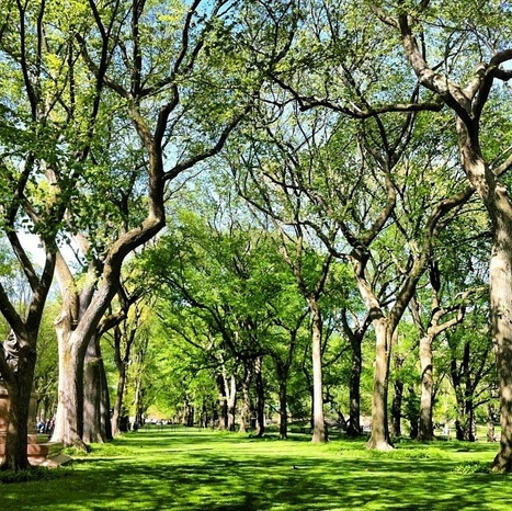 Large City Parks and Green Spaces Promote Well-Being | Psychology Today | Giving Some Love to the City | Scoop.it