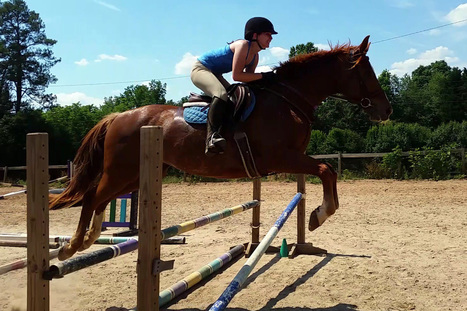 Lessons Learned: The Chestnut Mare, an Unexpected Partner | HORSE NATION | Horses and Equine Related Info | Scoop.it