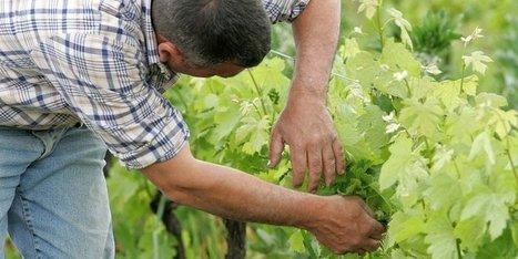 Pesticides : les risques sur les agriculteurs insuffisamment évalués | Agriculture en Dordogne | Scoop.it