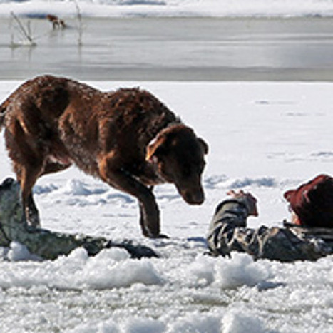 Loyal Dog Waits 30 Minutes for Master to Be Rescued from Freezing River | Xposed | Scoop.it
