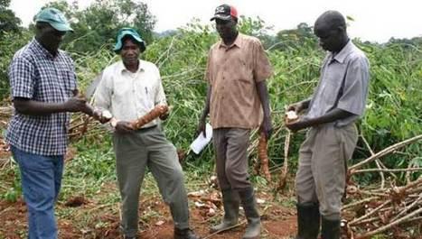 Le Pacsun, une alliance internationale pour sauver le manioc   agrophil   Scoop.it
