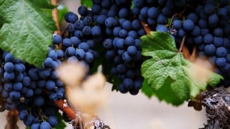 The Future of Winemaking Is in High-Tech Robotics: Video | Southern California Wine and Craft Spirits Journal | Scoop.it