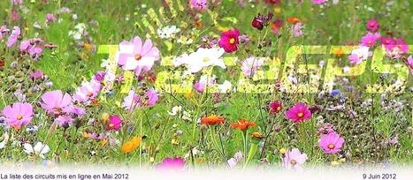 Des idées fleuries pour les pieds ! Newsletter TraceGps.com | Balades, randonnées, activités de pleine nature | Scoop.it