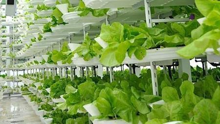 Vertical farming: A hot new area for investors | Vertical Farm - Food Factory | Scoop.it