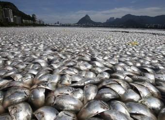 Pollution : des milliers de poissons morts au Brésil | Toxique, soyons vigilant ! | Scoop.it