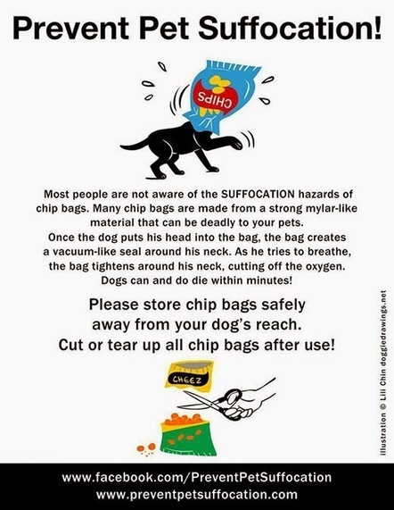 Dawg Business: It's Your Dog's Health!: Bree Almost Suffocated In A Chip Bag. Prevent Pet Suffocation | Trends | Scoop.it