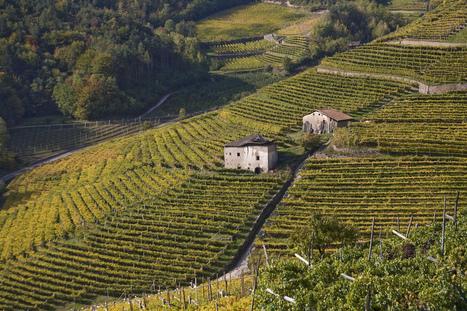 Weekly Wine Quiz #31 - Trentino-Alto Adige - Vino in Love | Vino in Love | Scoop.it