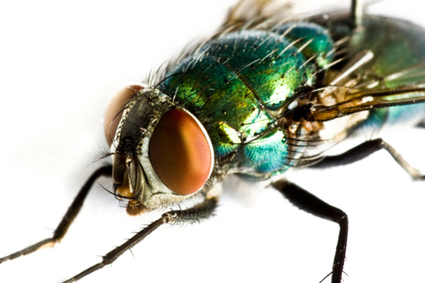Fly Screens: The Best Insect Repellent | Pest Control | Scoop.it