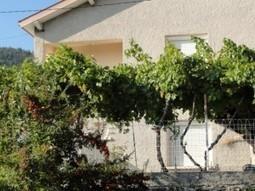 Faire pousser des raisins sur la pergola : mode d'emploi | Piscine, natation | Scoop.it