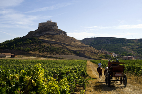 Explora la gastronomía castellana de la Ribera del Duero | Restaurantes | Restaurantes | Scoop.it