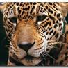 Environmental news from Peru