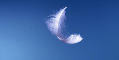 L'effet plume … ou la puissance de l'interdépendance - Joy & Business | Joy and Business | Scoop.it