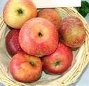 Celui qui comparait le prix des pommes - Bio & co   Terroir   Scoop.it
