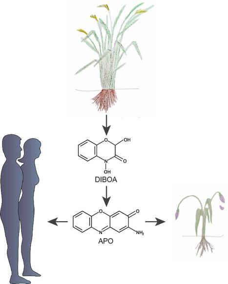 La guerre chimique à laquelle se livrent les plantes - Un article de Le Blog d'Albert Amgar | Ecologie, Agro-écologie, Enseignement agricole | Scoop.it