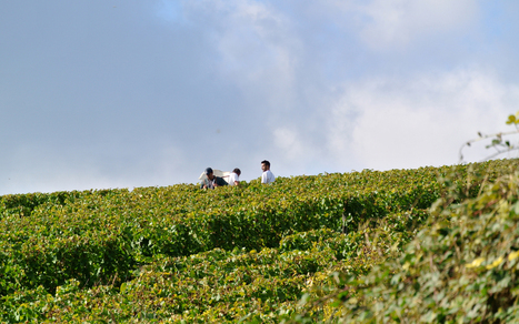La Bourgogne recrute 7000 vendangeurs - DijonBeaune.fr | Culture Mission Locale | Scoop.it