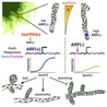 plant cell genetics
