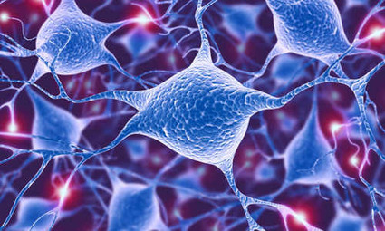 Multitasking hunger neurons also control compulsive behaviors | Usal - MediNews | Scoop.it