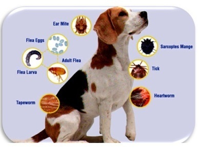 Advantage Multi for Dogs is used in pets for kill ear mites and flea infestation | Pet health and medication | Scoop.it