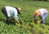 Une étude s'intéresse à l'innovation technologique dans l'agriculture bio | Comprendre le réel intérêt de produire une agriculture BIO en France plutôt que d'importer des produits présentant un label pas vraiment Certifié. | Scoop.it