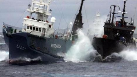 #Antarctique. Sea Shepherd lance ses navires contre les pêcheurs illégaux de légines | Arctique et Antarctique | Scoop.it