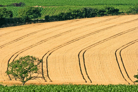 EU predicts up to 4 percent rise in wheat yields by 2022 | CIHEAM Press Review | Scoop.it