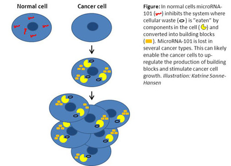 Small molecules can starve cancer cells | Think outside the Box | Scoop.it