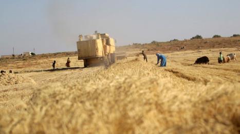 La lucha por el pan, el arma más insospechada de la guerra siria - RT | Un poco del mundo para Colombia | Scoop.it